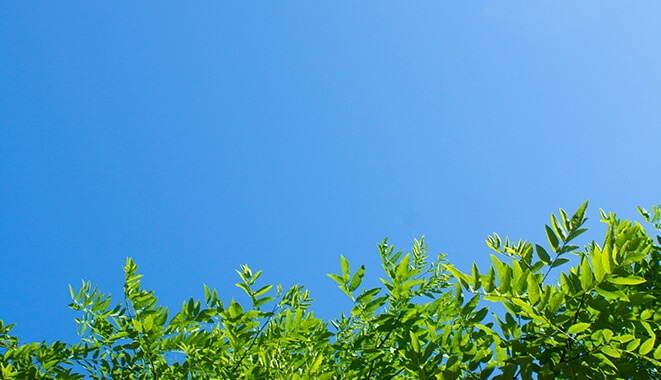 A blue sky with tree tops